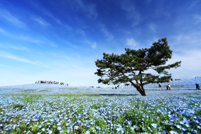 茨城 ひたち海浜公園